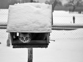 Cat Feeder by efffkaK