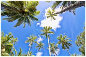 Coconut trees by jaydoncabe