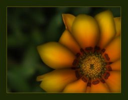 Flower and Light by Hassan9