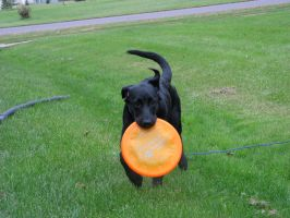 Zena: First Frisbee Day by ariakh