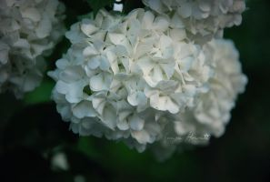 Flower by SoniaPhotos