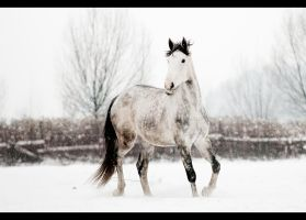 Winter 4 by paula2206-photo