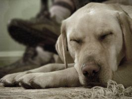 Let Sleeping Dogs Lie by Paranormallity