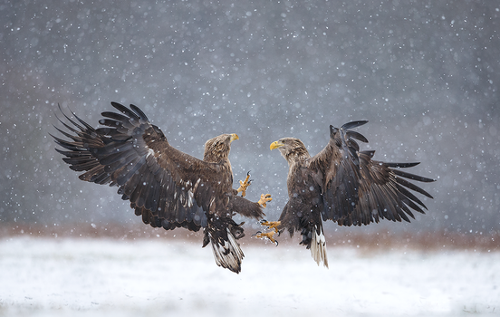 Snowy fight by BogdanBoev