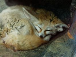 Sleeping Fox by Lyn-Kat