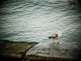 Lonely Seagull by redcatmoonlight