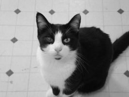 B and W cat in B and W by goat-peach