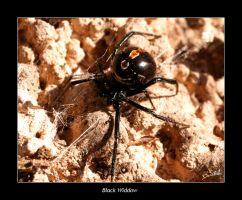 Black Widow s by FirGeL