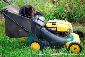 Mow Time by AngelaLeonetti