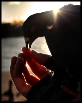 A bird in the hand. by Cohi