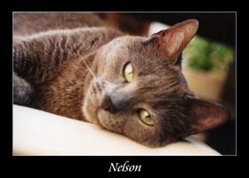 Nelson by bgr