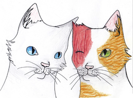Cloudtail and Brightheart by Lainira