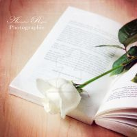 Rose and book by AmandineRopars