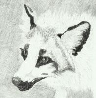 Marble fox by Sollerion