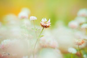 _CloveR_ by Real-Janifer