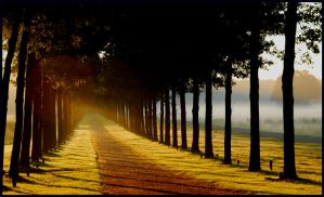 Lightthought 462 by lightthinker