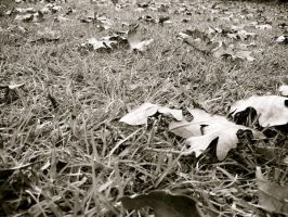 Leaves on the Ground 1 by DevilWillPay10