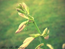 Little Mantis by Emagyne