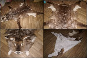 Waterbuck Pelt SOLD by CabinetCuriosities