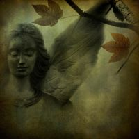 Delicate... by hearthy