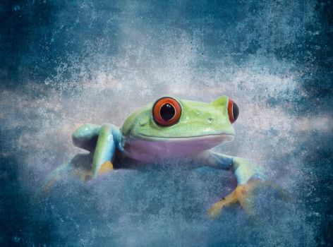 Texturised frog by AngiWallace