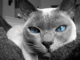 Blue Eyes 2 by Warriors89643