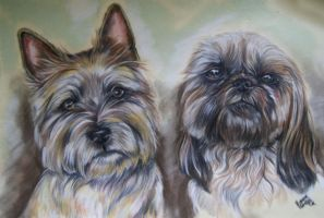 Cairn terrier and chi chu dog by Jniq