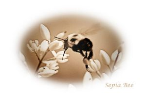 Sepia Bee by Tailgun2009