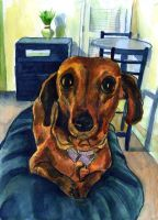 My dachshund Clementine by Caricature80