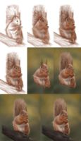 Red Squirrel Step-By-Step by jinkies36