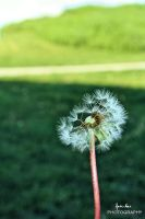 Blow away by fatinhasphotography
