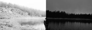 Dichotomy by InfiniteForests