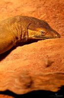 Sunburnt Reptilian by RaynePhotography