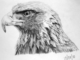 Eagle by bloofeesh