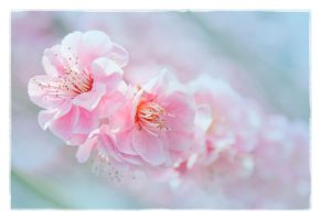 Ume Blossom by FightTheAssimilation