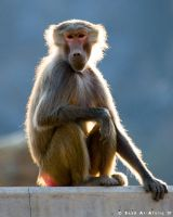 Monkey Business by Saad-A
