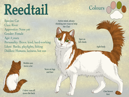 Reedtail -Warrior Cats- reference sheet by PrinzeBurnzo