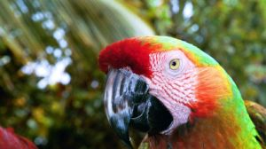 Rainbow Parrot from Maui by kilkennycat
