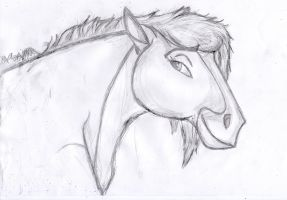 tryed a horse by coolrat