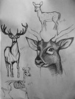 Deer Studies by xitsveronikiox