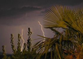 Palms and Lightnings by Gandi24
