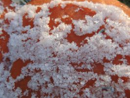 old snow on a smashed pumpkin by CanadianThunder