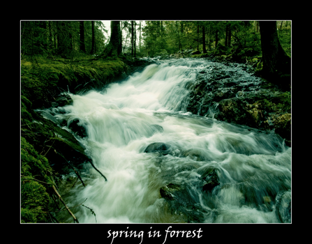 springtime in forrest... by kaborge