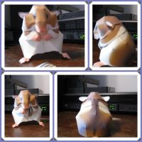 Syrian Hamster canon papercraf by giraffesonparades
