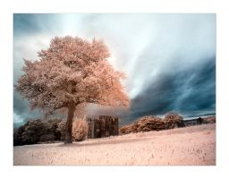 Pearly Skies - IR by Wayman