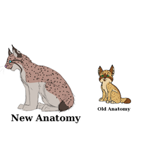 Lynx anatomy new and old by Rubyjessicalockheart