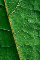 Leaf ... by AgataSwat