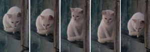 Beautiful Cat Stock by Wesley-Souza
