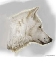 Wolf head study by face-in-the-sky