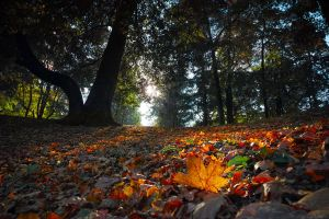 Autumn and Sigma Dp0 Quattro  _7_ by my-shots